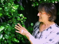 Pære eller æbletræer op af mur