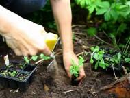 Planter i bakke